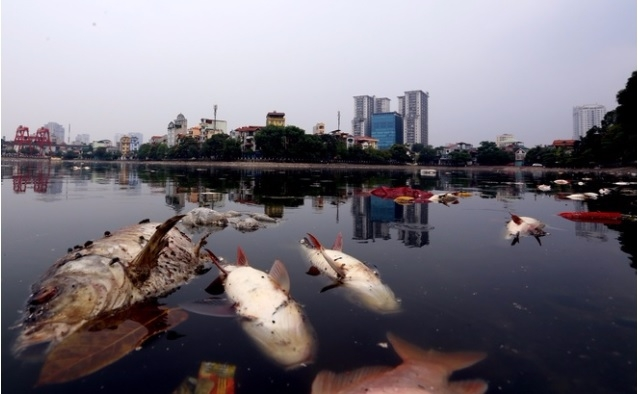 Hà Nội: Nỗi lo nước sạch nhưng không sạch